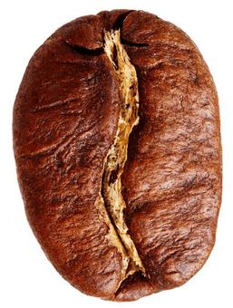 So sieht eine Kaffeebohne der Sorte Arabica aus.