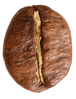 So sieht eine Kaffeebohne der Sorte Robusta aus.